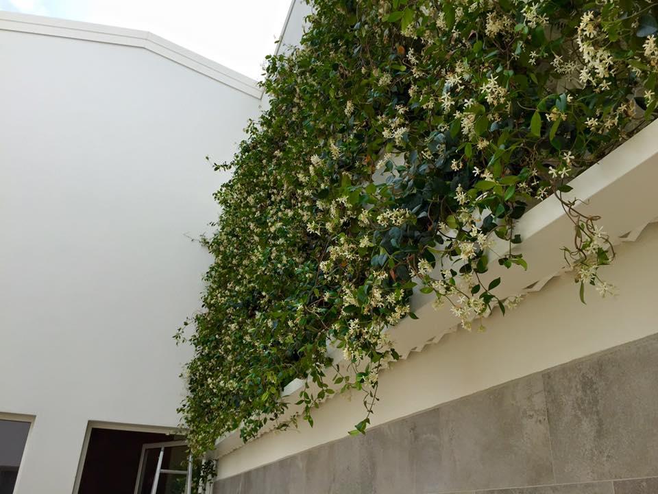 verde verticale sistema esterno Naturewall GRD