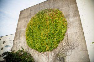 Graffiti vegetali sui muri di Besançon